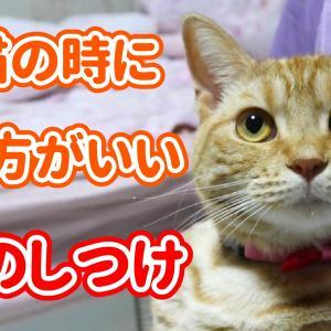 【初めて猫を飼う人へ】子猫の時にしておいた方がいい「3つのしつけ」