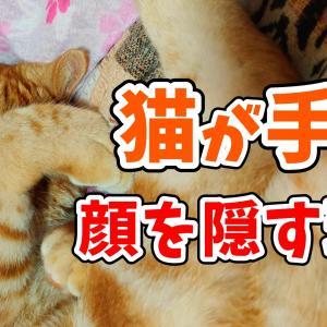 猫が眠る時に「手で顔を隠して寝る」のはなぜ?考えられる5つの理由