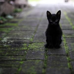 【吾輩は猫ねここねこ】【YA】【ないでぇ!】♥♡♥ なんJ民「嘘松!嘘松!」あたし将「もしかして君って夏目漱石が猫だと思ってるの?」