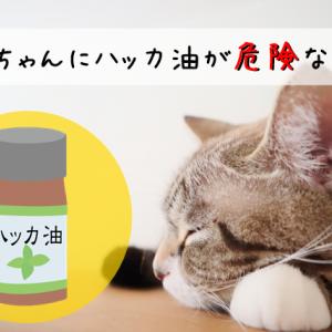 ハッカ油が猫に危険な理由は?ペットにも安全な虫除け対策&暑さ対策をチェック
