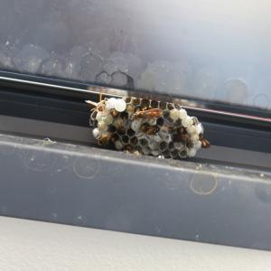初めてのハチの巣退治