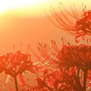 向秋の候の読み方と意味は?使える時期と時候の挨拶を含む例文も紹介!