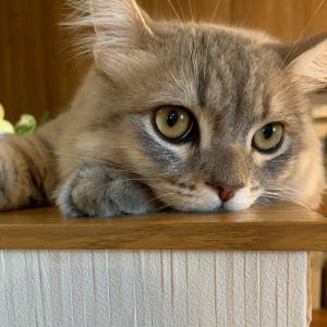 猫アレルギーが猫と過ごして5ヶ月!