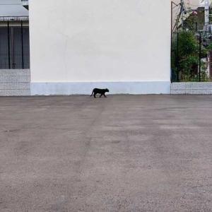 にぎやかな河原町、一本折れると猫がいて
