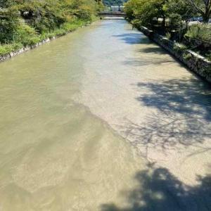 流れ降りてきた白川砂でいっぱい。
