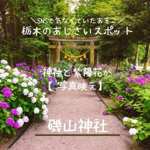 【鹿沼】紫陽花に囲まれた参道 磯山神社 栃木の紫陽花スポット