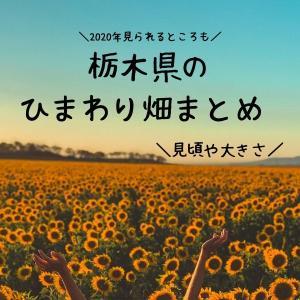【2020年版】栃木県のおすすめひまわり畑4選【益子、野木、上三川、那須】
