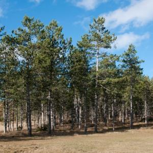 なぜ人は「木を見て森を見ず」に陥ってしまうのか?その理由と対処について!