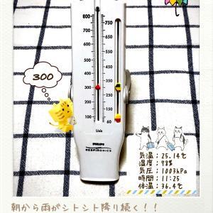 朝から雨だねぇ〜!!