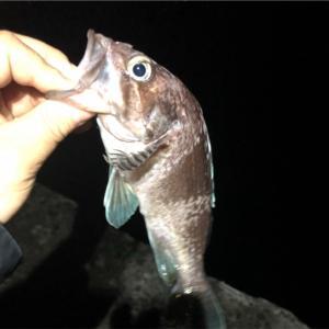 みんなの北海道釣り情報【小樽南防波堤】