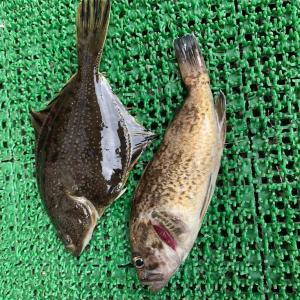 みんなの北海道釣り情報【石狩東防波堤】40UPのアブラコ狙いに再度石狩へ!今回の釣果はいかほど、、?