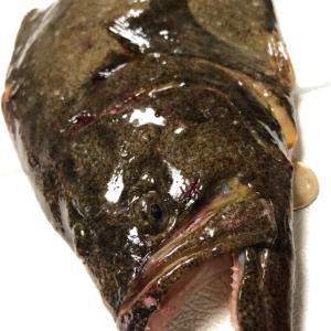 【小樽市近辺】まだ釣れるぞ50UPのヒラメ!具体的な釣りの情報を調査してみた