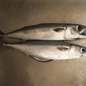 みんなの北海道釣り情報【旭川市忠別川】川でもサバが釣れるってか?!他の釣り人は何が釣れていたか調査してみた