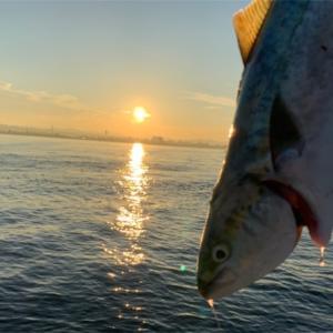 みんなの北海道釣り情報【函館湾】60UPのイナダがあがった!!ショアからブリサイズも釣れるってまじか?!