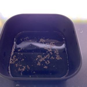 キャメルシュリンプ  「1/11孵化幼生」日齢8日にて全滅
