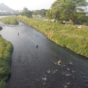 天降川でウホウホ、せごどんの鮎を釣る。