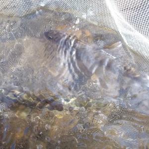 日田で、良い釣りを成し遂げる。