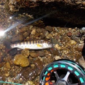 京二川の可憐な川で山女魚を狙う。