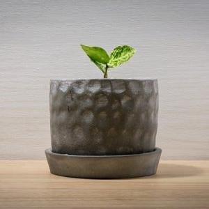 NASAも推奨する観葉植物!検査室においてホルムアルデヒドを除去してみない?