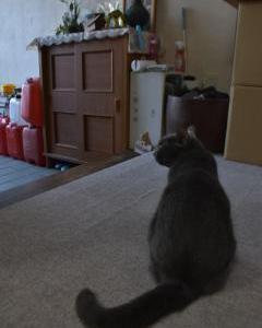 【茨城県警】事故で殉職の警察官を待つ愛猫ラム 「お父さん、どうしちゃったんだろうね。さみしいね…」