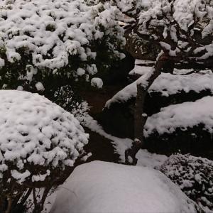 雪が怖くなった