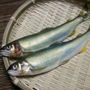 夏の風物詩、鮎をとって食べる!