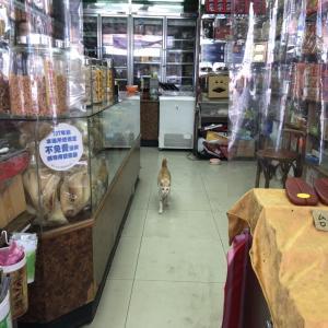 大稻埕 猫歩き