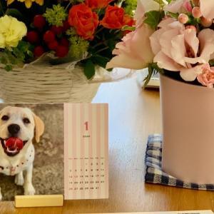 【TOLOT】愛犬の写真でオリジナルカレンダーを作ってみました