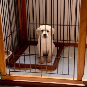 大型犬のペットサークルに迷ったらコレ!【リッチェル/Richell】レビュー