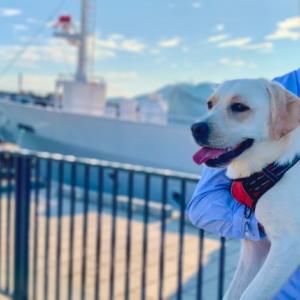 長崎市ドライブ③大型犬と行く水辺の森公園【みみ旅🐾】