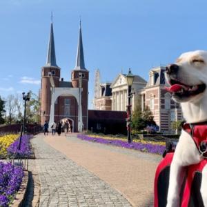 大型犬と宿泊!ハウステンボスに行ってきました①【みみ旅🐾〜準備編〜】