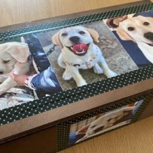 ティッシュケースを買ったら愛犬のイタズラが激減しました