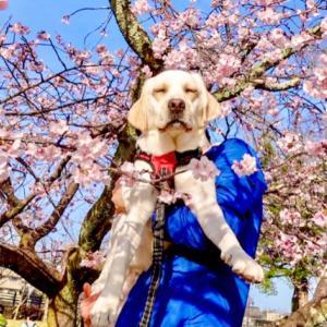諫早周辺で犬と一緒に桜を楽しめるおすすめお花見スポットをご紹介!【長崎県諫早市】