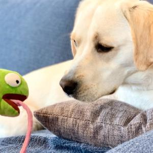 犬用おもちゃとおやつの定期便サービスを1年間試してみた【DoggyBox(ドギーボックス)】