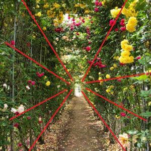 ワンランク上の写真を撮るために~構図で写真は変わる⑤(放射線構図)