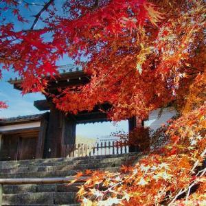 シリーズ「京都の秋を撮る」~曼殊院