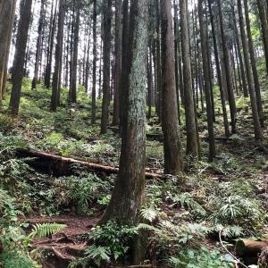 青梅丘陵ハイキングコースを歩いたら・・・バテた