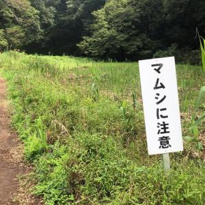 埼玉に行って「マムシに注意」の山を歩いてみた
