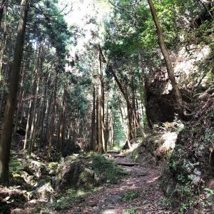 山登りはドラクエと同じ〜伊豆ヶ岳に行ってきた