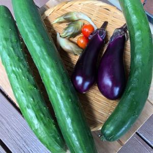 ほったらかしズボラガーデニング、時々野菜⑥
