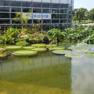 突撃!巨大温室植物園