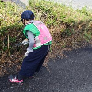 掃除と公園とメダカ
