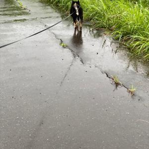 雨の散歩&畑