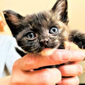 稀に見るブス猫!猫の多頭飼い復活の巻