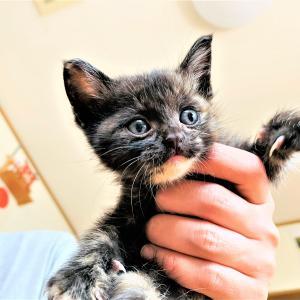 子猫保護10日経過・・・先住猫と仲良くできるのか?