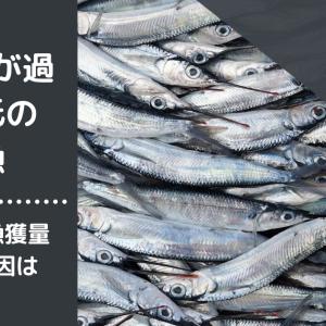 【サンマが過去最低の不漁】サンマの漁獲量減少の原因は