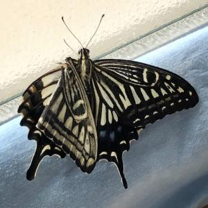 【体験談】蝶の羽根の再生 動画のとおりやろうとしたけれど
