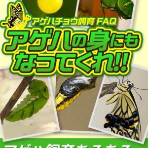 アゲハチョウ飼育FAQ