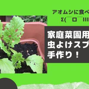 アオムシで野菜の葉が穴だらけ!家庭菜園用の虫除けスプレーを手作りしたよ