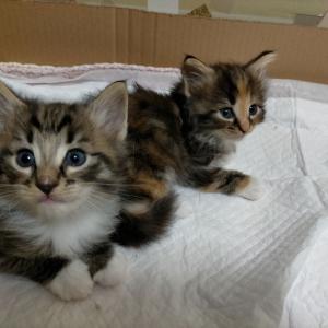 子猫さん日記①